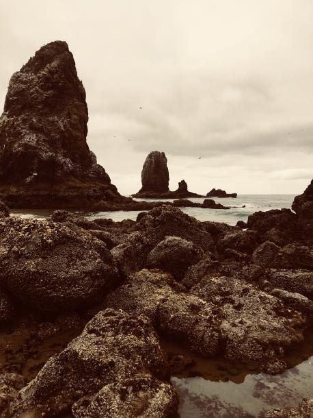 L.S. Berthelsen, Oregon coast, Cannon Beach, Marine Garden, fat sea stars