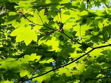forest, Oregon, L.S. Berthelsen, hiking, silence, meditation