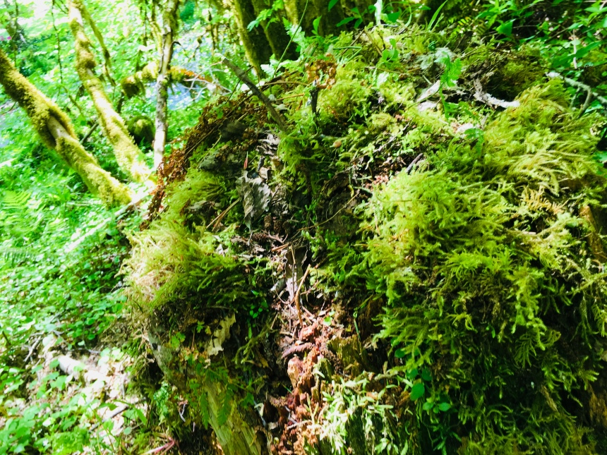 Moss, Oregon, Rainforest, forests, calm